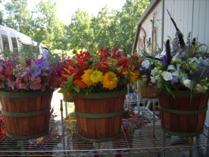 Bouquets of flowers ready for market