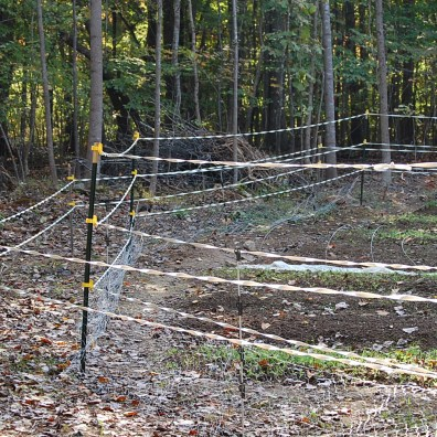 Our new fence is five feet tall. The chicken wire in a hasty anti-rabbit measure. We'll install it properly when we have some time.