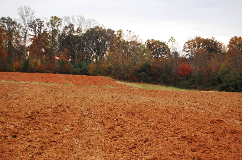 The fields, with the tobacco disced in.