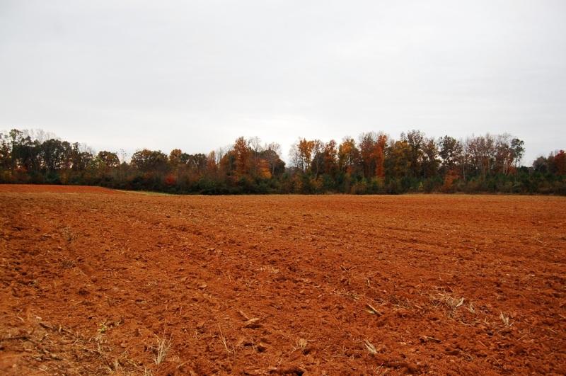 Spring Forth Farm, November 2013.