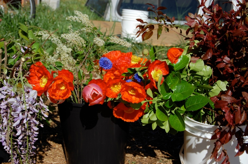 Buckets of Spring Forth Farm flowers ready for arranging for the Last Friday Art Walk in Hillsborough on April 25th.