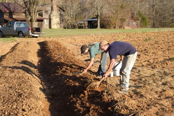 Planting Peonies