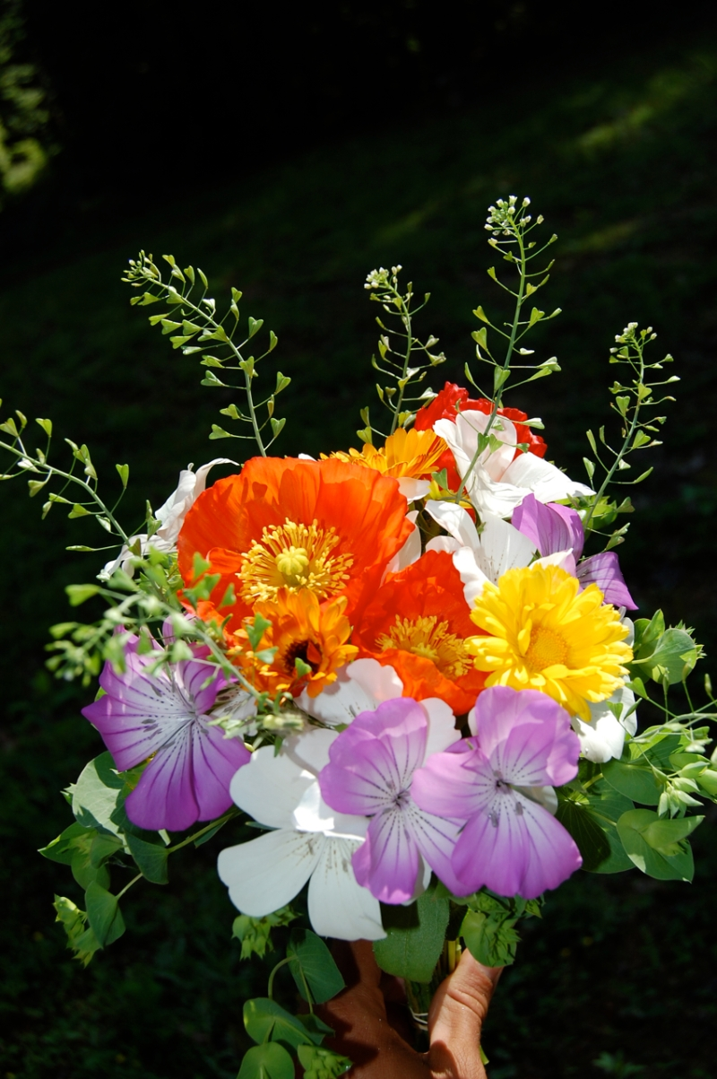 Bouquet with Icelandic poppies, calendula, agrostemma, bupleurum, and wild peppergrass.