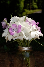 """Agrostemma """"ocean pearl"""" produces a beautiful combination of white and rose flowers."""