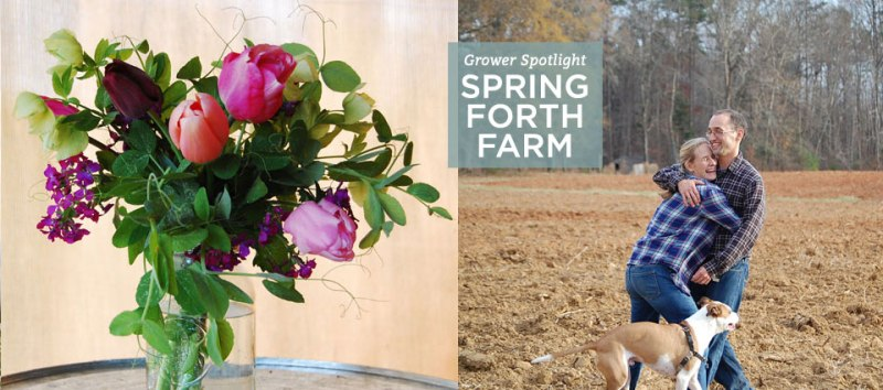 field-to-vase-spring-forth-farm-grower-spotlight