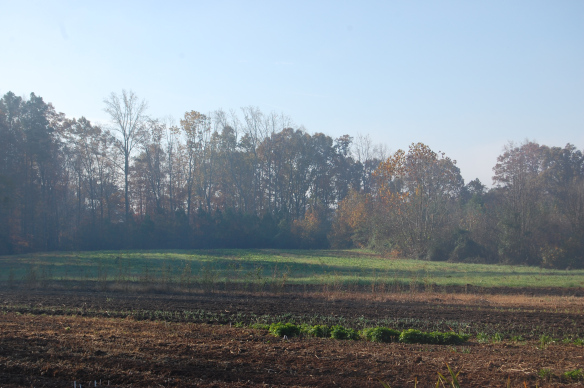 Spring Forth Farm, November 2014.