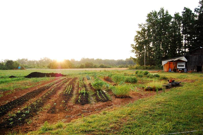 Spring Forth Farm, June 2014.