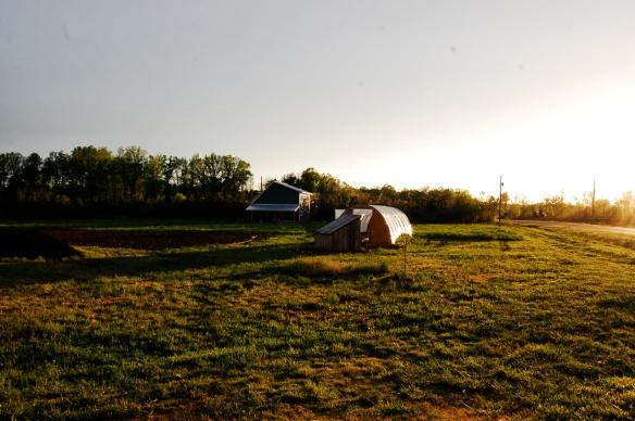 Spring Forth Farm.