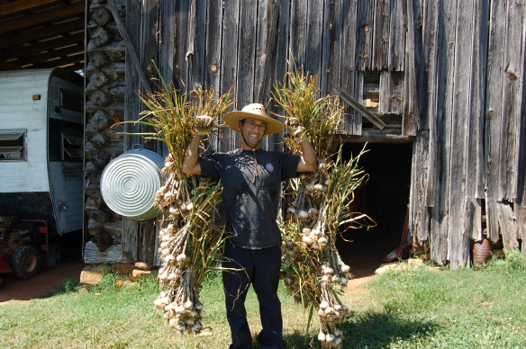 Jonathan with half the garlic harvest.